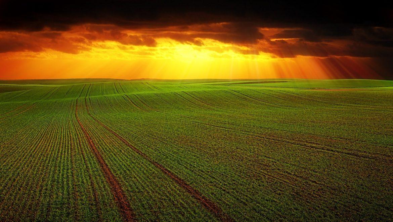 למה דווקא קרקע חקלאית בתור השקעה?